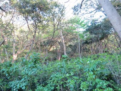 観音崎公園 山